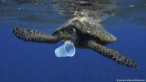 Council plans to lead the way by banning single-use plastic from its buildings