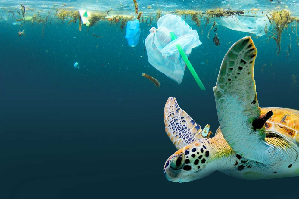 'We can do better' saving the world's oceans from crisis