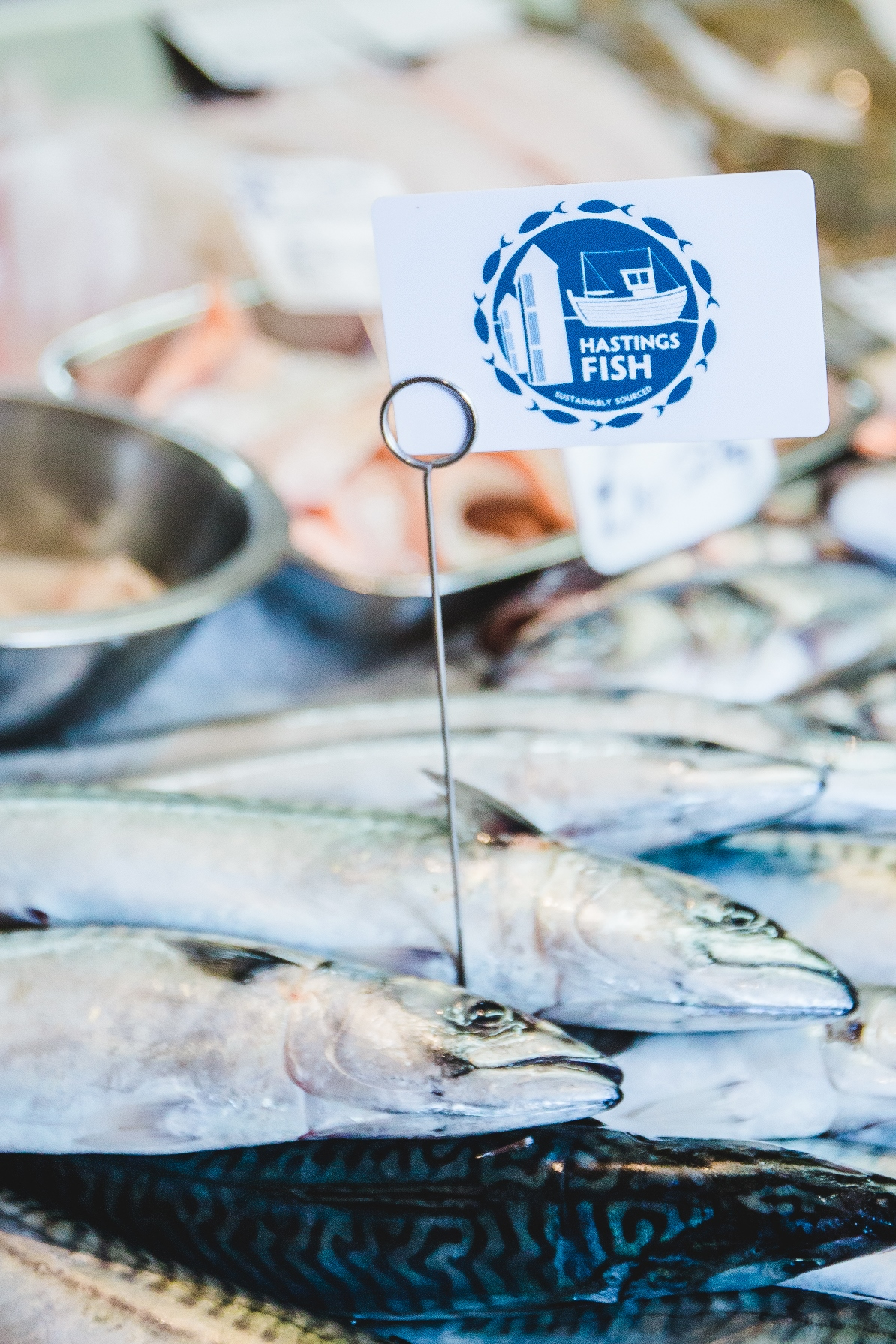 New 'Hastings Fish' brand launches this weekend at Seafood and Wine festival