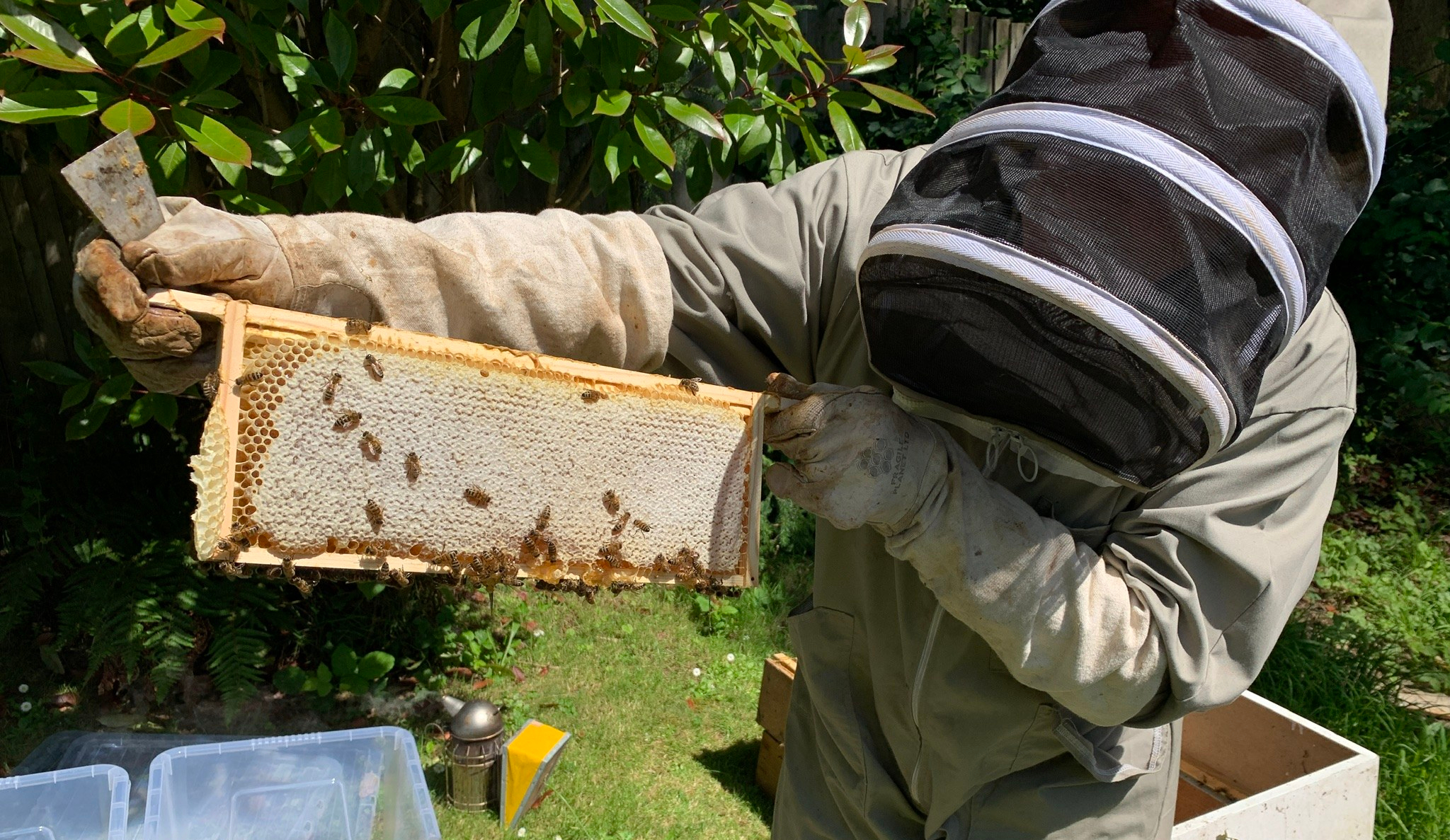 Back garden bees – in an environmentally conscious world keeping a hive of bees can help the planet survive