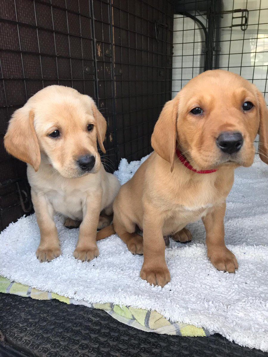 Could you give a police puppy a home?