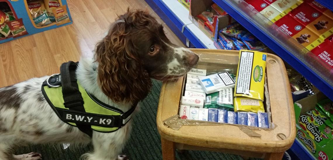 Meet the tobacco dogs in Hastings next week