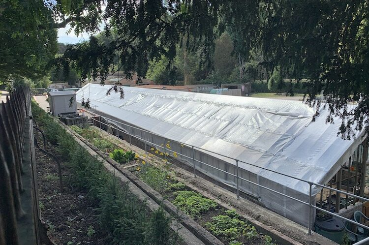 Raising the roof – how you can help restore Alexandra Park's 1930s greenhouse to is former glory