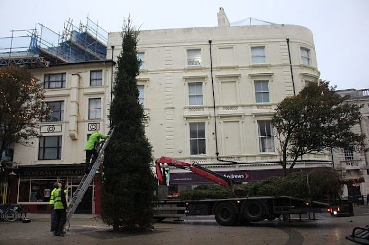 Council pledges a little Christmas cheer – trees go up around town next week